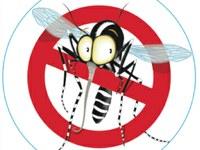 Zanzare: consigli per la prevenzione