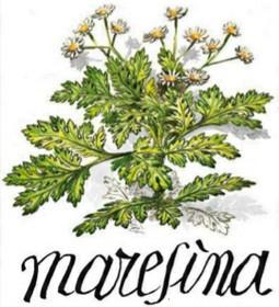 Maresina